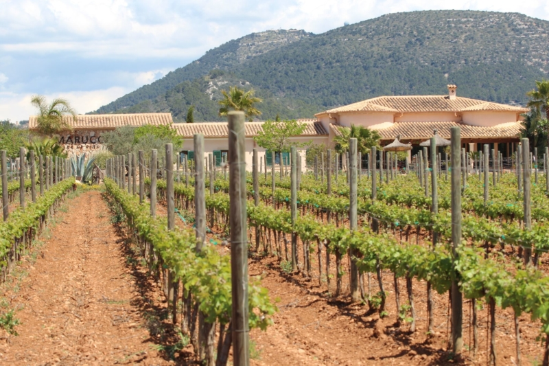 Die Bodega Maruccia auf Mallorca